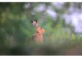 兔子在草地上四处张望_875318301