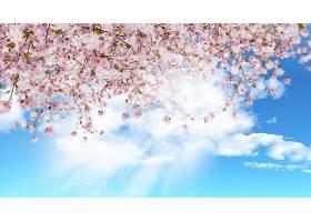 白色和粉红色的花_103680501