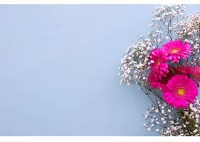 蓝色背景上的婴儿口香花和粉色非洲菊花_409376301