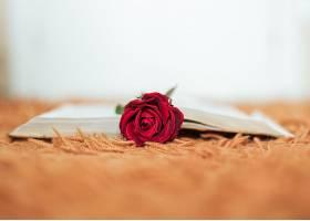 翻开的书里藏着红玫瑰_1167811901