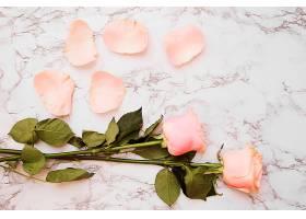 白色大理石纹理背景上有花瓣的玫瑰花_345342001