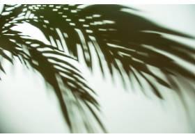 背景上棕榈叶的暗影_476042601