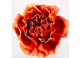 红色康乃馨花的正上方_251824801