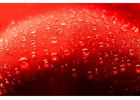 红色花瓣水滴特写_1163108701