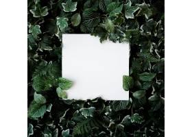 绿叶为背景配白纸框_477763101