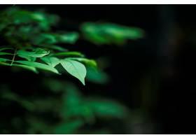 绿叶在模糊的叶子背景上的特写_317521101