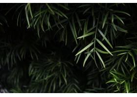 绿叶植物的选择性聚焦拍摄_1118337301