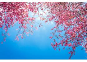 开着粉红色花朵的可爱树枝_97873501