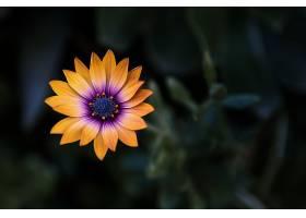 背景模糊的橙色花的特写镜头_1167829501