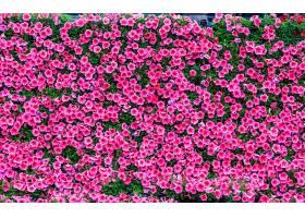 脉美壁纸五颜六色的花纹成长_124414301