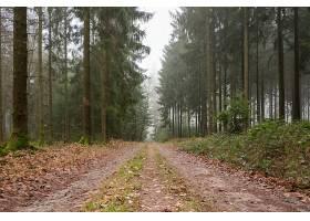 绿树成荫的森林中央被树叶覆盖的小路_985249001