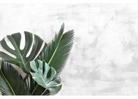 白色的美丽热带树叶_950783501