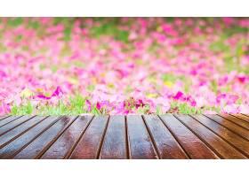 木质露台背景是美丽的紫色花朵_380564701