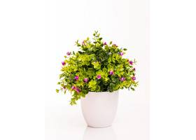 白色盆栽中的彩色花朵孤立在白色上_918397301