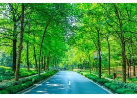 绿色公园_127841901