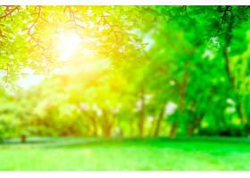 绿色公园景观_127819501