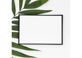 白色空白框特写白色背景上孤立的绿色棕榈_512046801