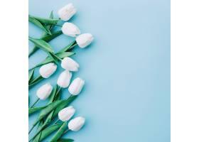 白色郁金香以淡蓝色为背景右侧留有空间_355352601