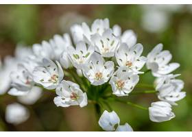 白花的特写镜头_1099083201