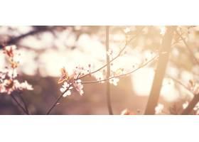 美丽的五颜六色的花朵背景模糊不清水平方_115991701