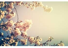 美丽的五颜六色的花朵背景模糊不清水平方_115991901