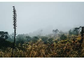 满是不同野花的田野和雾蒙蒙的天空_1189013101
