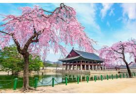 韩国首尔春天樱花盛开的景福宫_1130660401