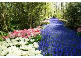白色粉色和蓝色的花朵像一条被树木包围_1099047801
