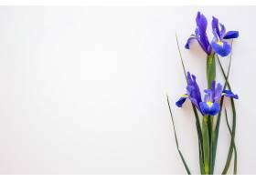 白色背景上孤立的紫色蝴蝶花_409382701