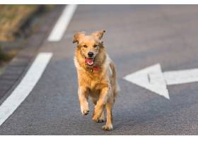 快乐的宠物狗在公园里玩耍_112009601