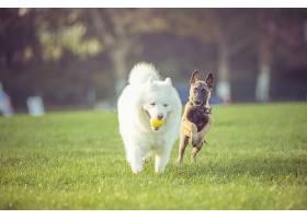 快乐的宠物狗在草地上玩耍_112003901