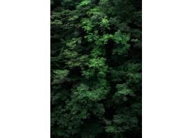 绿色树枝的垂直镜头非常适合作为背景_1204024401