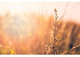 模糊背景前植物的特写镜头_432153401