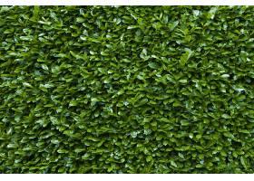 绿色树篱纹理背景的特写镜头_1167798401