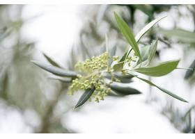 橄榄枝的春天_116124201