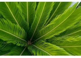 绿色棕榈叶图案背景自然背景和壁纸_985962601