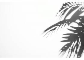 白色背景上有阳光的黑色影子树叶_476040601