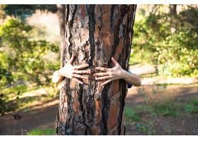 绿色森林里拥抱树干的双臂_235646101