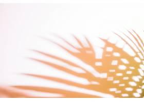 白色背景上棕榈叶的影子_476777901