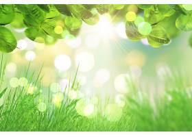 绿色的树叶和草地在波克灯的背景下_91641301