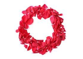 白色背景上的红玫瑰花瓣花环用于周年纪念_204541201