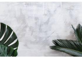 白色背景上美丽的热带树叶海报横幅明信_943415401