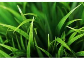 绿草如茵的特写镜头_694887301