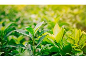 花园里新鲜的绿叶和黄叶_391195901