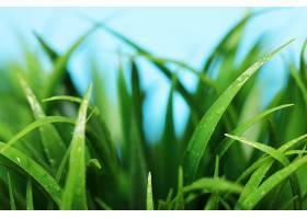 绿草如茵的特写镜头_694887601