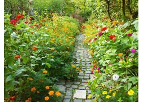 花园里狭窄的小径周围开满了五颜六色的鲜_1011938301