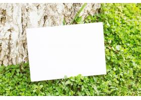 绿草如茵的白纸_143848501