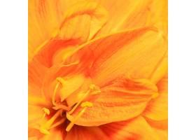 美丽的巨型春花_1255882401