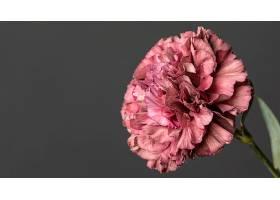 美丽的巨花_1255883801