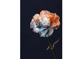 美丽的巨花_1255885401